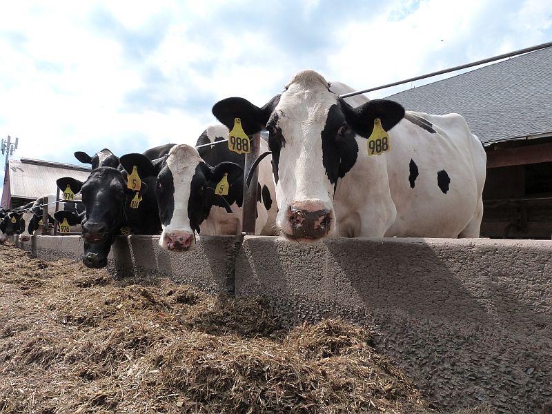 The Farmer's Cow Summer on the Farm Tour