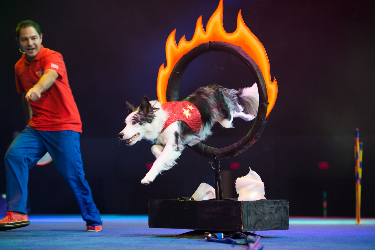 Chris Perondi's Stunt Dog Experience in Hartford CT