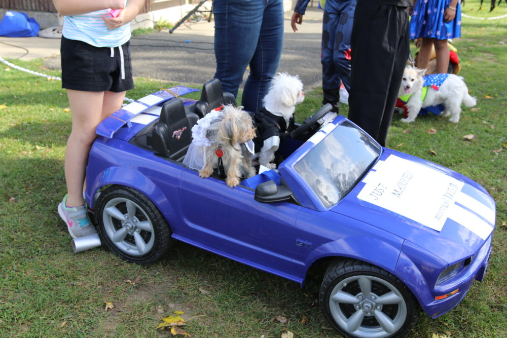 Annual Danbury Pet Expo