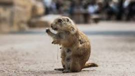 Family Fun for Groundhog Day