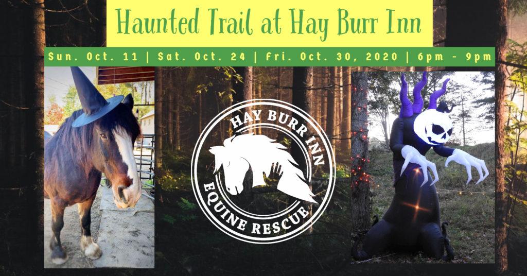 Horse Equine Rescue Connecticut